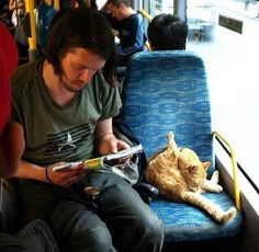 Need to rename this board 'cats and famous cats' as Bob is now such a celebrity. Street Cat called Bob - on the bus being a cat.