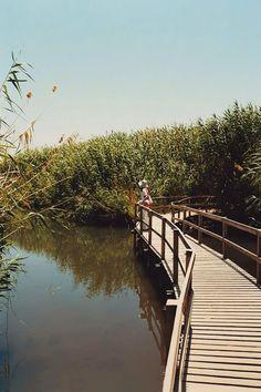 3311d3129194 Tenho em mim todos os sonhos do mundo. Nature Reserve