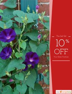 10% OFF on select products. Hurry, sale ending soon! Check out our discounted products now: https://orangetwig.com/shops/AAAibxW/campaigns/AABufU4?cb=2015012&sn=CaribbeanGarden&ch=pin&crid=AABue9z
