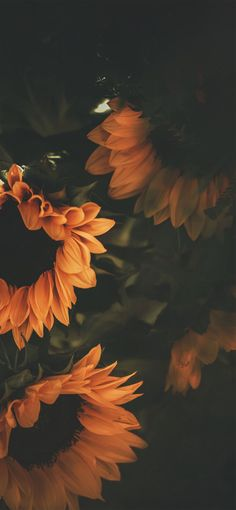 Iphone Xs Max – Flower Wallpaper For Iphone X is amazing hd wallpapers for deskt… Tumblr Wallpaper, Flor Iphone Wallpaper, Sunflower Iphone Wallpaper, Lock Screen Wallpaper Iphone, Iphone Background Wallpaper, Locked Wallpaper, Aesthetic Iphone Wallpaper, Nature Wallpaper, Wallpaper Samsung
