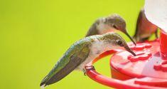 When Should I Take Down My Hummingbird Feeder?