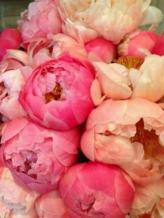 Peonies-- for the bridal bouquet. Fresh Flowers, Pink Flowers, Beautiful Flowers, Exotic Flowers, Yellow Roses, Pink Roses, Beautiful People, Peony Flower, My Flower