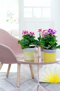 Create an indoor oasis with a trio of Regal Pelargonium #houseplants