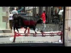▶ Fadjen, taureau anti-corrida à la rencontre des bretons.mp4 - YouTube