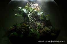 The Madagascar BiOrbAir Terrarium (part fourteen) - Pumpkin Beth Flowering Plants, Planting Flowers, Madagascar 2, White Flowers, Beautiful Flowers, Miniature Orchids, Rare Orchids, Bottle Garden, Terrarium Plants