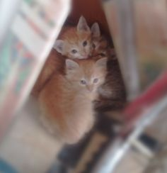 Baby cats in my home :-)