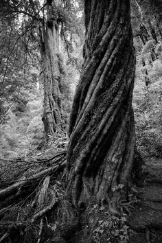 Old Coigüe Tree Trunk Photo by Gabriel Bitran -- National Geographic Your Shot