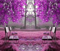 56- I like this picture because it contain purple weather that main every thing in the picture are purple such the trees , the chairs and the ground.
