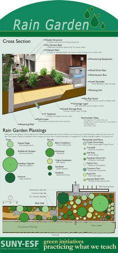 Photos of Rain Gardens | rain garden