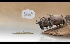 Ed Rodrigues - Curta Animado: Wildebeest