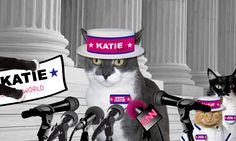 GLOGIRLY: Katie Names Cathy Keisha Campaign Manager In Cat Ruler Race