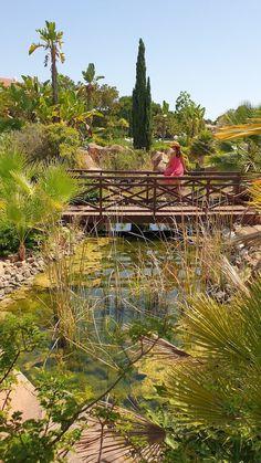Nos jardins do Hotel Hilton Vilamoura - Algarve - Portugal © Viaje Comigo Algarve, Portugal, Vineyard, Outdoor, Traveling, Morning Breakfast, Outdoors, Vine Yard, Vineyard Vines