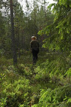 Jänisjemma, forest, forest nymph, spruce