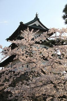 Sakura Festival at Fukuoka, Japan. I want to attend the Sakura Festival in japan, just because i think it is really outrageous. Places Around The World, Around The Worlds, Great Places, Beautiful Places, Go To Japan, Visit Japan, Fukuoka Japan, Japanese Castle, Aomori