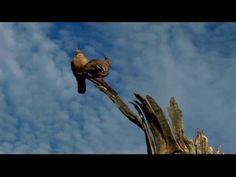 Parks Australia - Uluru-Kata Tjuta National Park Uluru-Kata Tjuta National Park was first inscribed on the World Heritage list in when the international… Bald Eagle, National Parks, World, The World