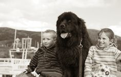 newfoundland dogs are the best
