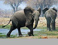 I love reading trip reports. You can get a lot of information out of it. Fotofeeling.com is a very good website with great Images and reports. Elephant Love, I Love Reading, African Safari, Wildlife, In This Moment, Adventure, Nature, Elephants, Wordpress