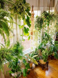 The best flower pot design ideas for decoration inside the house 06 Room With Plants, House Plants Decor, Plant Rooms, Easy House Plants, Hanging Plants, Indoor Plants, Indoor Gardening, Organic Gardening, Hanging Flower Pots