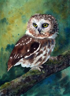 Northern Saw-Whet Owl Watercolor Painting - Fine Art Archival Print - Limited Edition Bird Art by Laura D. Owl Watercolor, Watercolor Animals, Watercolor Paintings, Art Original, Original Paintings, Saw Whet Owl, Owl Artwork, Owl Pictures, Beautiful Owl