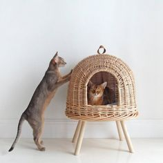 Vine Cat Bed - House for Cats - Wicker House for Pets - Pet House - Eco Handmade . - Vine Cat Bed – House for Cats – Wicker House for Pets – Pet House – Eco Handmade Bed for Ca - Cat Wall Furniture, Office Furniture, Cat Room, Animal House, Soft Pillows, Cat Breeds, Crazy Cats, Cats And Kittens, Abyssinian Kittens