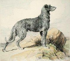 Herbert Dicksee - Scottish Deerhound, an ancient breed.