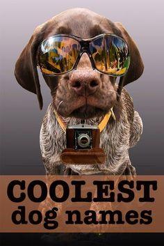 250 Cool Dog Names