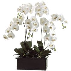 """This floral arrangement features a high quality faux Phalaenopsis Orchid Plant. Note: Some """"fluffing"""" of the piece may be neccesary after unpacking to fully bring out the beauty in the arrangement. Artificial Flower Arrangements, Floral Arrangements, Faux Flowers, Silk Flowers, Flowers Vase, Pretty Flowers, Orchid Planters, Artificial Orchids, Silk Plants"""