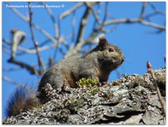 squirrel and blue skies