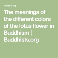 The meanings of the different colors of the lotus flower in Buddhism | Buddhists.org