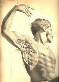 Anatomy…is the foundation of the curative art, cultivated as a science in all its branchings; and comparison is the nurse of reason, which we are fain to make our guide in bringing the practical to bear productively. Joseph Maclise, Surgical Anatomy (1857)