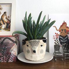 """Finally! My first porcelain plant pot is settled on my desk."" Mirdinara"