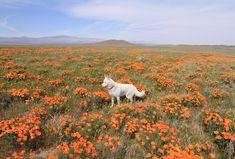 Beauty in the orange flowers