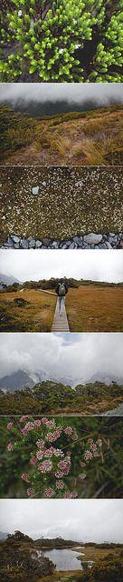 summit hike by janis roseanne, via Flickr