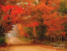 Red Red Autumn Photograph by Terri Gostola