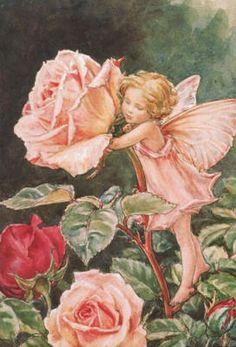 themagicfarawayttree: The Rose Fairy