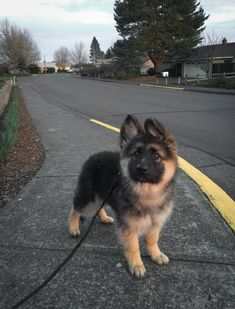 Wicked Training Your German Shepherd Dog Ideas. Mind Blowing Training Your German Shepherd Dog Ideas. Cute Little Animals, Cute Funny Animals, Baby Animals, Cute Baby Dogs, Cute Dogs And Puppies, Funny Puppies, Beautiful Dogs, Animals Beautiful, Gsd Puppies