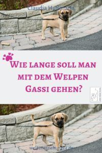 Wie lange darf man mit dem Welpen Gassigehen How long can you walk with the puppy? Animals And Pets, Baby Animals, Funny Animals, House Breaking A Puppy, Amazing Animals, Young Animal, Cat Supplies, Pet Accessories, Pets