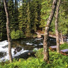 😘Build bridges, not walls😘#skånland #northnorway #godsommer #forest #river #elv #fishing #bridges_aroundtheworld #bridges #bridgesofinstagram #norge #norway #liveterbestute #mittnorge #visitnorway #north #bestofnorway #ignorway #norwayphotos #norwaynature #essence_of_norway #landscapeofnorway #ig_nordnorge #ig_norway #loves_norway #ilovenorway #turistforeningen #norges_fotografer