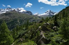 Gran Paradiso National Park italian alps   #aostavalley #alps #travel #holidays