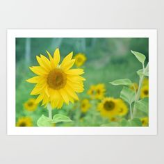 Sunflowers. Vintage dreams Art Print