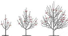 Cum si cand se curata pomii fructiferi? Vertical Garden Diy, Terrarium, Dandelion, Pergola, Outdoor, Design, Home Decor, Gardening, Plant