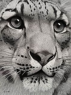This is a pencil drawing.... a drawing!!!!