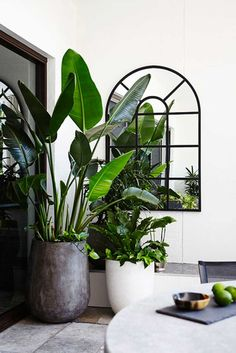 Giant Bird of Paradise (Strelitzia Nicholai). Image from Adam Robinson Design's Casaba Waterloo White project – Home Decor Ideas – Interior design tips Balcony Garden, Indoor Garden, Home And Garden, Plants On Balcony, Pool Plants, Garden Bed, Interior Plants, Interior And Exterior, Interior Garden