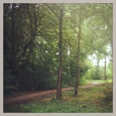 Path through the forest. Mauritspark De Meern