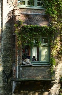 belgium houses exterior * belgium houses + belgium houses belgian style + belgium houses exterior + belgium houses illustration + belgium houses architecture + belgium houses interiors + belgium houses home + houses in belgium Future House, My House, Balkon Design, Interior And Exterior, Wall Exterior, Beautiful Places, Scenery, Windows, House Styles