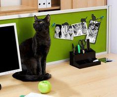 cat clip picture hangers