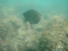 A fauna e a flora dos bancos de corais, nas galés de Maragogi, em Alagoas, Brasil.  Fotografia: Divulgação.