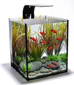 aquarium design group - Freshwater Aquarium Design Ideas