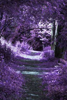 Violet Aesthetic, Dark Purple Aesthetic, Lavender Aesthetic, Aesthetic Colors, Purple Love, All Things Purple, Purple Rain, Shades Of Purple, Purple Stuff