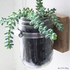 DIY wall-mounted Mason jar planter.  I've seen this concept done a variety of ways, but I kind of favor the single jar effect. -- Hanging Mason Jar Planter: the3Rsblog.